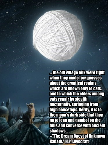 It is said that in Ulthar, which lies beyond the river Skai, no man may kill a cat...