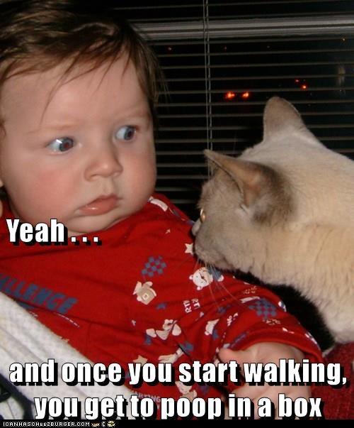 animals baby box Bad Advice Cat caption Cats funny - 8587953920