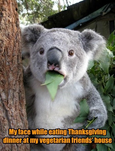 leaf thanksgiving koala - 8587963392