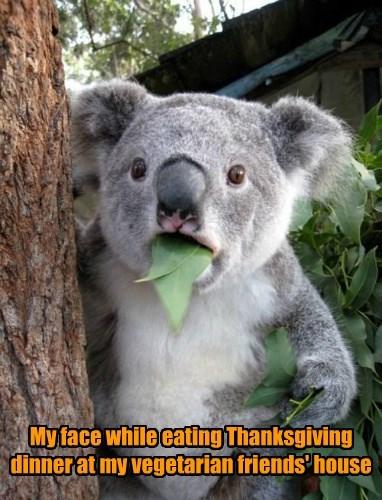 leaf thanksgiving koala - 8587963392