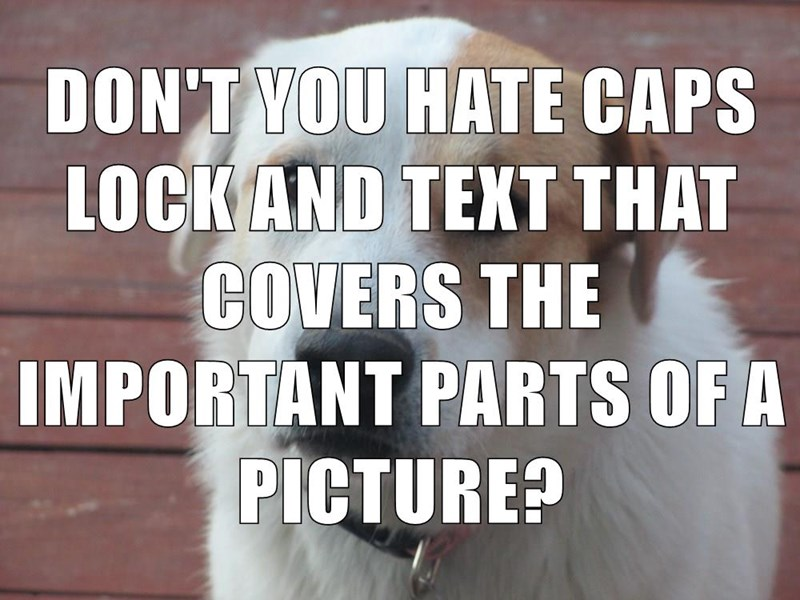 animals dogs caps cover caption funny - 8587980288