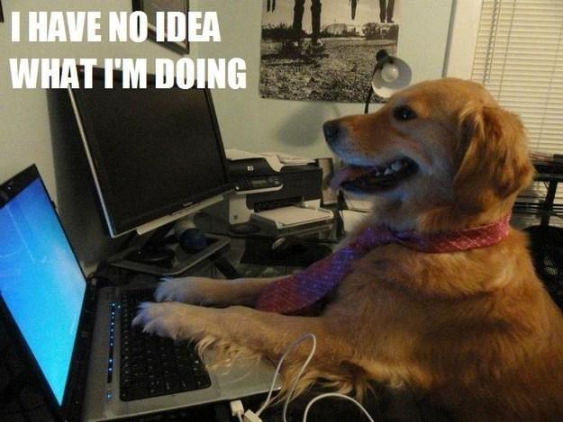 Dog - I HAVE NOIDEA WHAT I'M DOING