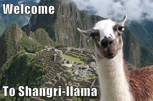 Welcome To Shangri-llama
