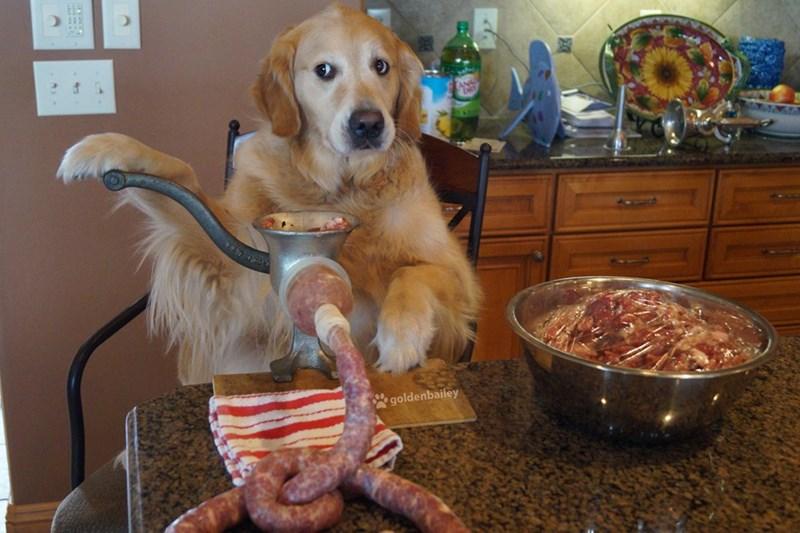 Dog - goldenbailey