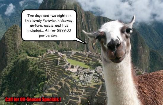 llama alpaca - 8588092160