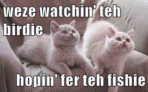 weze watchin' teh birdie  hopin' fer teh fishie