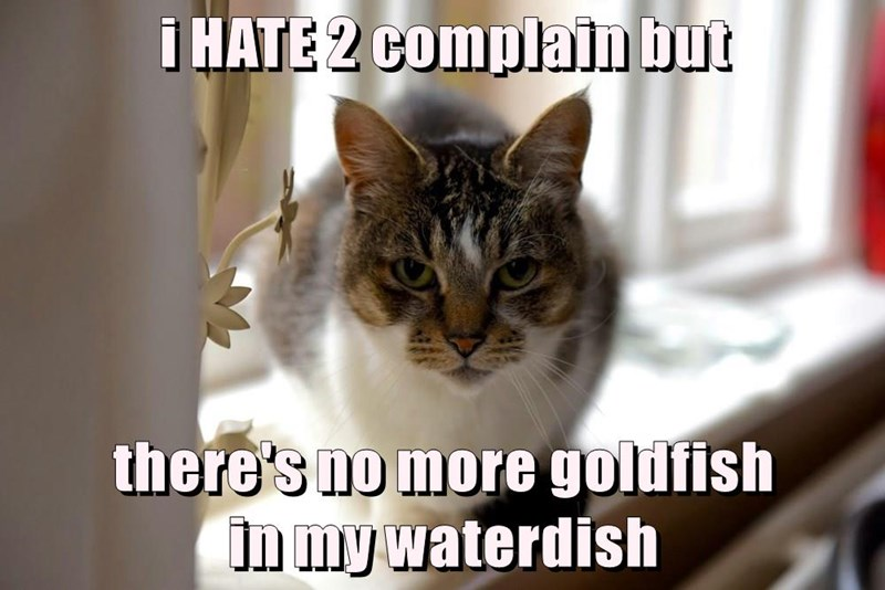 i HATE 2 complain but  there's no more goldfish                                    in my waterdish