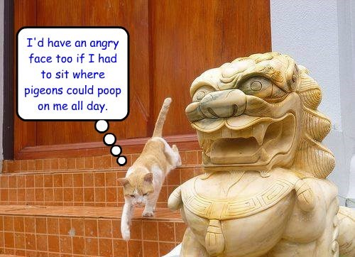 kitty empathises