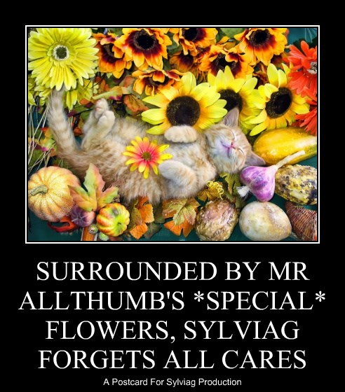 SURROUNDED BY MR ALLTHUMB'S *SPECIAL* FLOWERS, SYLVIAG FORGETS ALL CARES