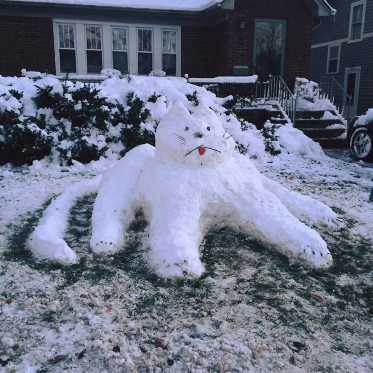 Derpy Snow Cat
