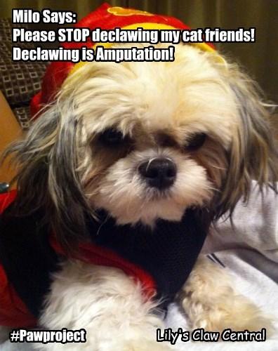 Ban Declawing!