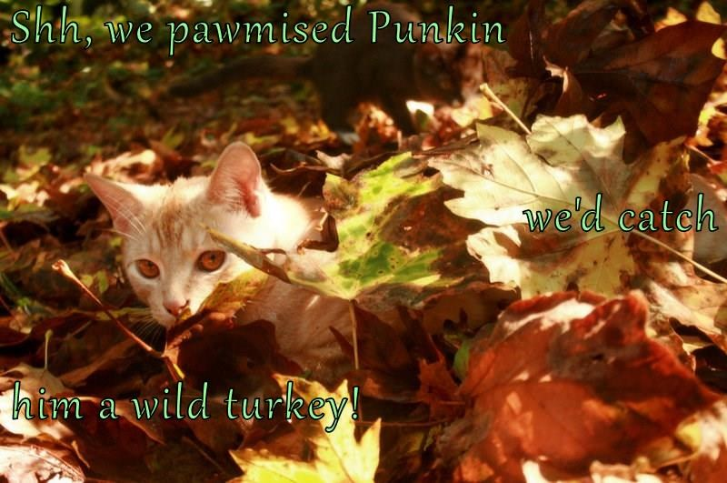 Shh, we pawmised Punkin we'd catch him a wild turkey!
