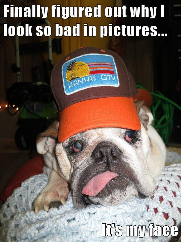 dogs,cute,caption,funny