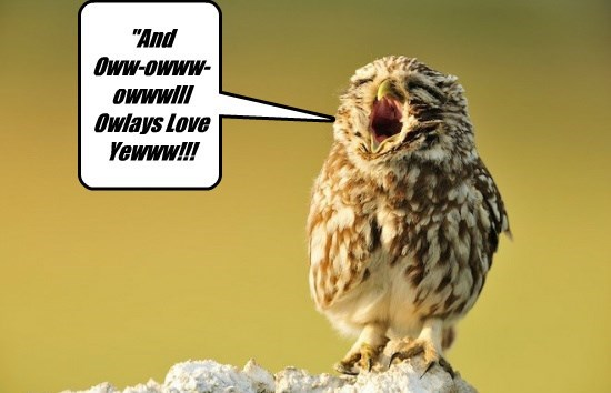 Music birds Owl - 8588385024