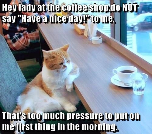 animals wake up coffee caption Cats funny Morning Sunshine - 8588441344