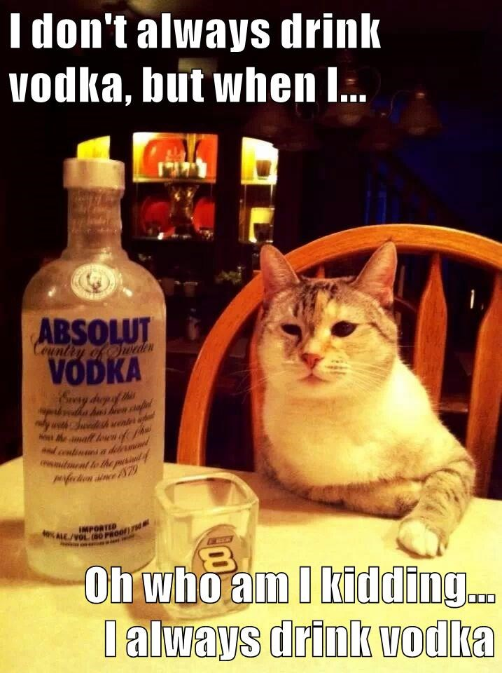 animals bar vodka caption Cats funny drinking problem - 8588479488