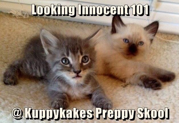 Looking Innocent 101                                                                               @ Kuppykakes Preppy Skool
