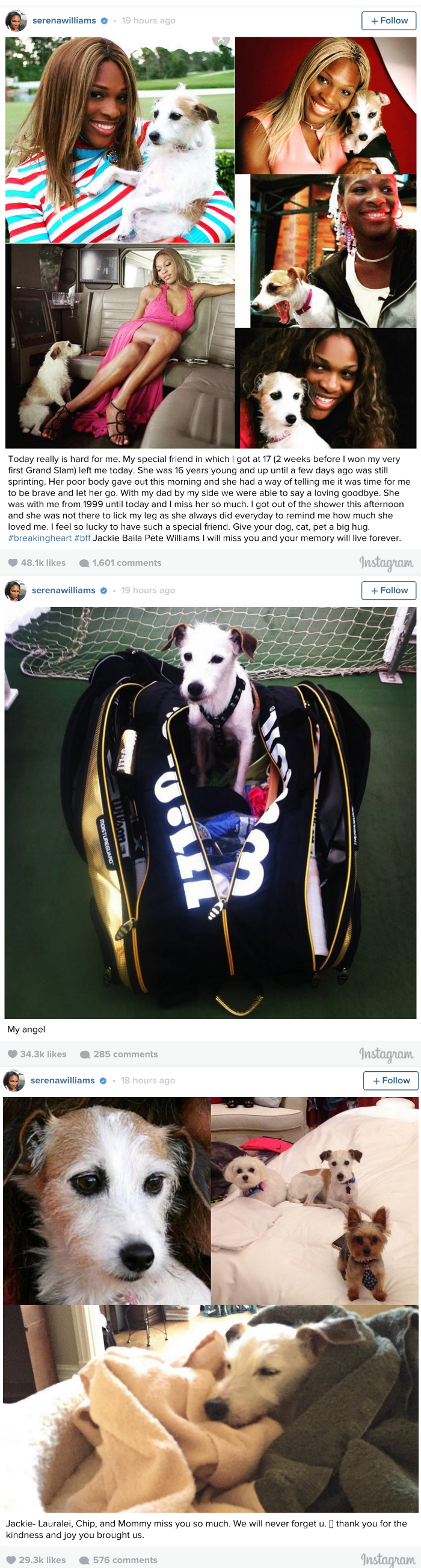 Serena Williams Posts a Heartbreaking instagram Tribute After Her Dog Passes away