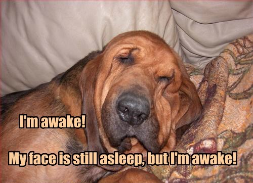 dogs caption funny waking up - 8588592896