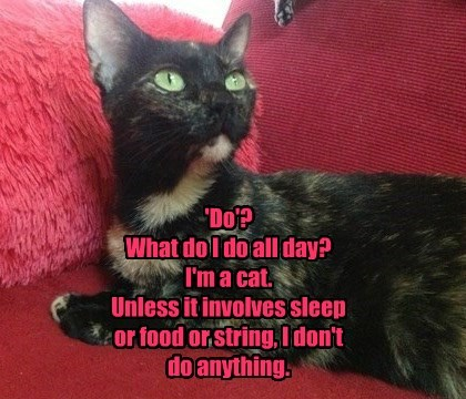 'Do'? What do I do all day? I'm a cat. Unless it involves sleep or food or string, I don't do anything.