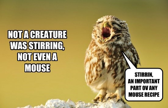 christmas,Owl,funny,animals,mouse
