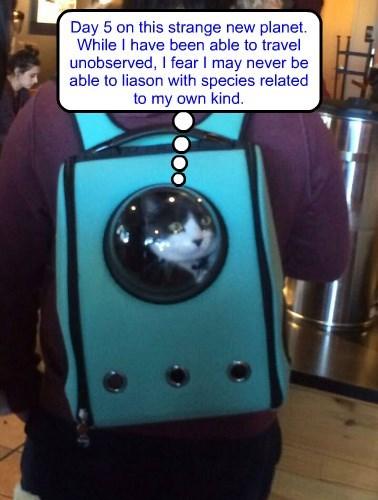 Spacemann Spiff, kitty version
