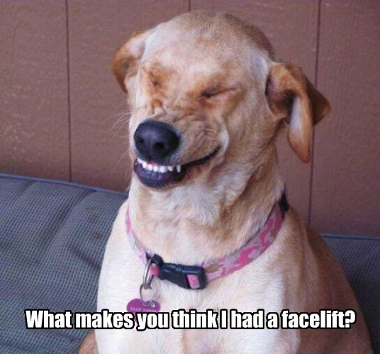 dogs caption funny smile faces - 8588694528