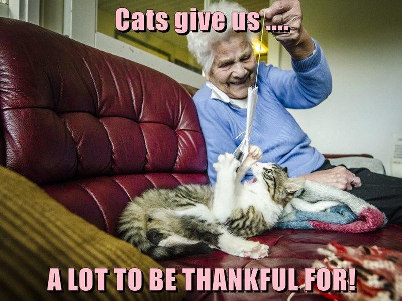 Cats give us ....  A LOT TO BE THANKFUL FOR!