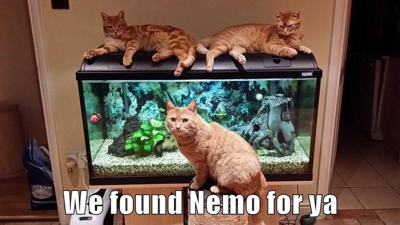 We found Nemo for ya