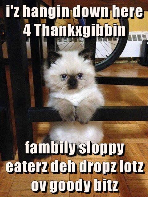 i'z hangin down here 4 Thankxgibbin   fambily sloppy eaterz deh dropz lotz ov goody bitz
