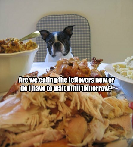 dogs leftovers thanksgiving Turkey caption funny - 8588985344
