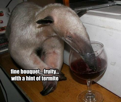wine anteater funny animals - 8588985600