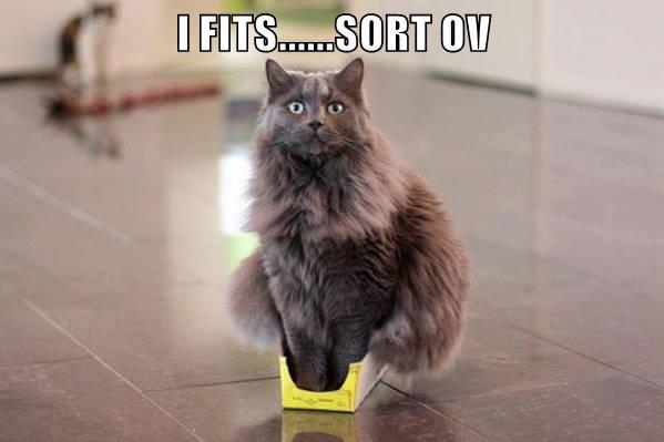 I FITS......SORT OV