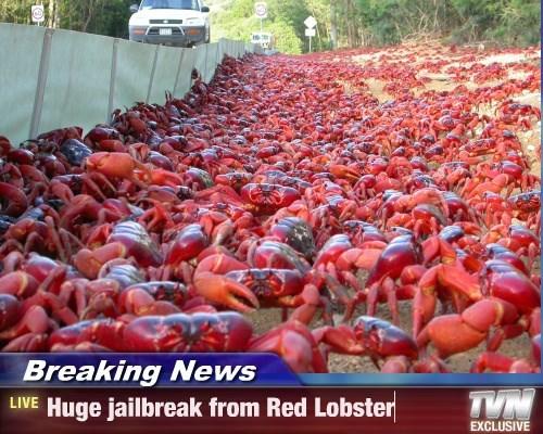 lobster funny animals - 8589012992
