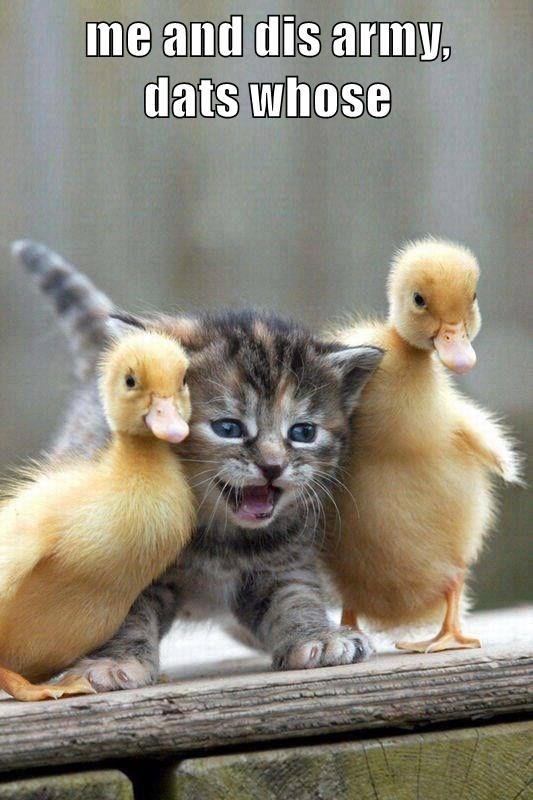 animals - 8589064960