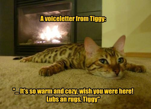 """A voiceletter from Tiggy:         """"... It's so warm and cozy, wish you were here!  Lubs an rugs, Tiggy"""""""