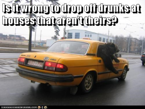 animals drunk bear taxi funny animals - 8589217280