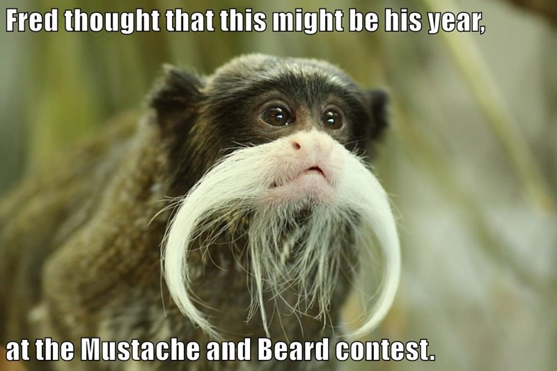 Fred thought that this might be his year, at the Mustache and Beard contest.