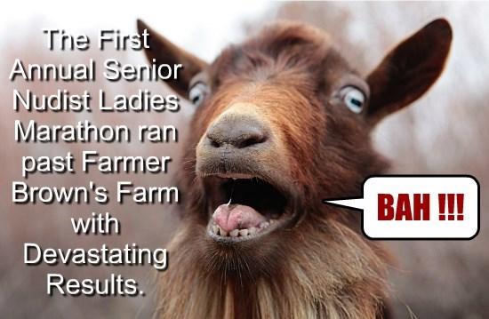 Most Farm Animals are Prudes