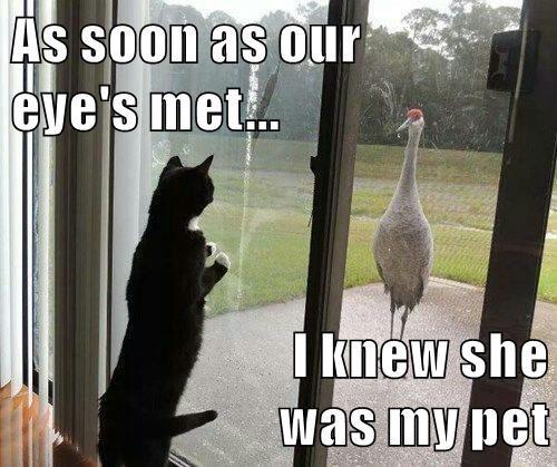 As soon as our                                   eye's met...  I knew she                                        was my pet