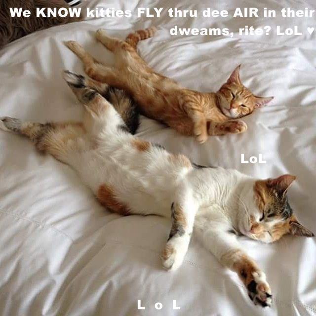 We KNOW kitties FLY thru dee AIR in their dweams, rite? LoL ♥                                            LoL L  o  L