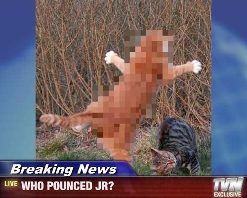 Breaking News - WHO POUNCED JR?