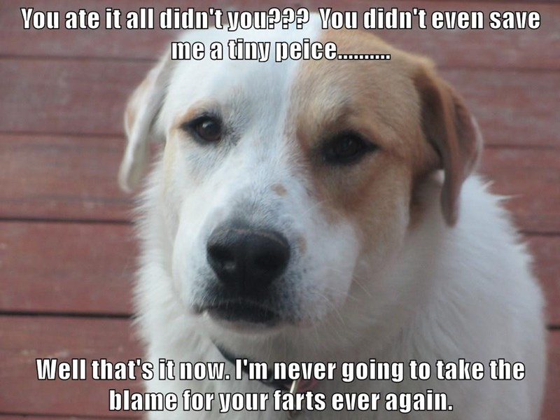 animals dogs farts save blame didnt ate piece caption all - 8589472768