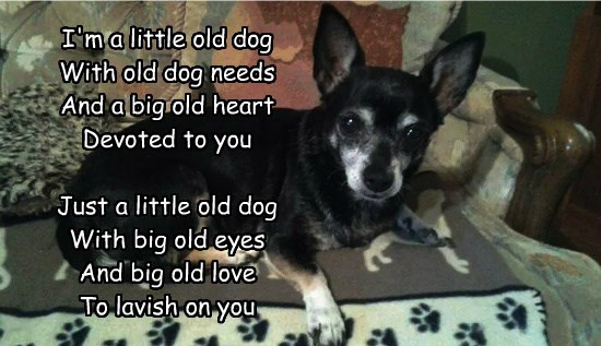 Just a little old dog