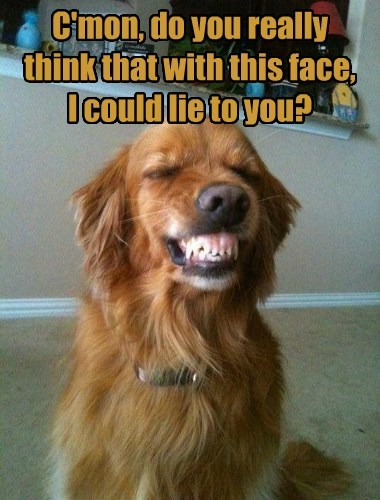dogs truth caption funny smile - 8589604352