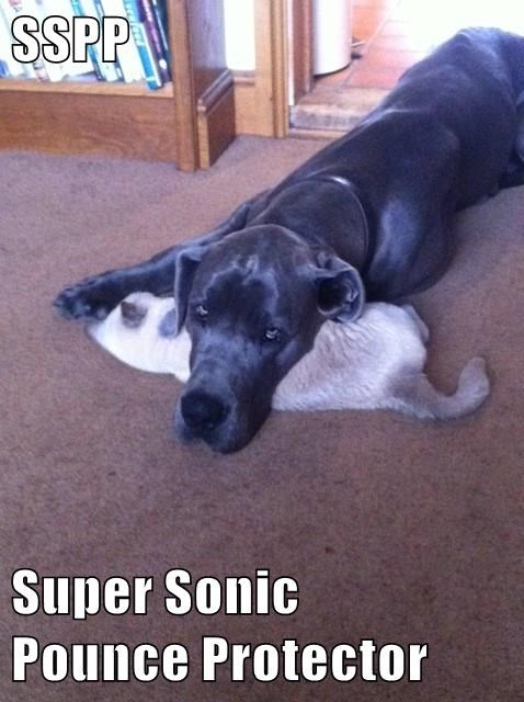 SSPP  Super Sonic                       Pounce Protector