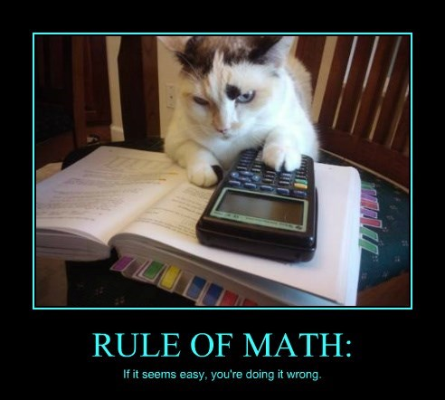 calculator,caption,Cats,math,funny