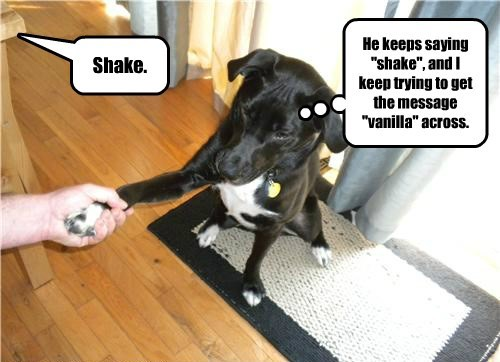 dogs,shake,message,vanilla,saying,caption,trying