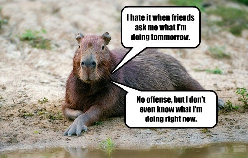 capybara funny animals - 8589686016