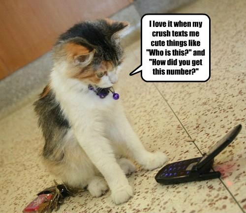 text,stalking,caption,Cats,funny